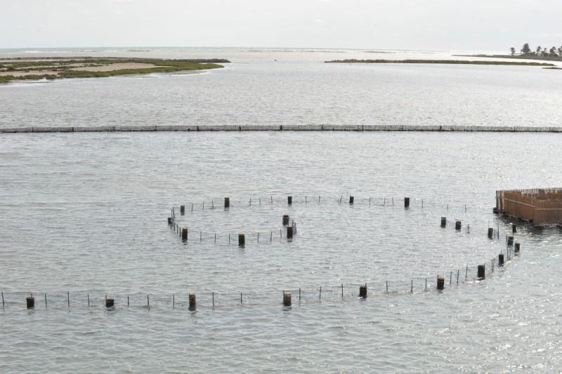 Las Encañizadas; protecting this historic fishing technique in La Manga del Mar Menor