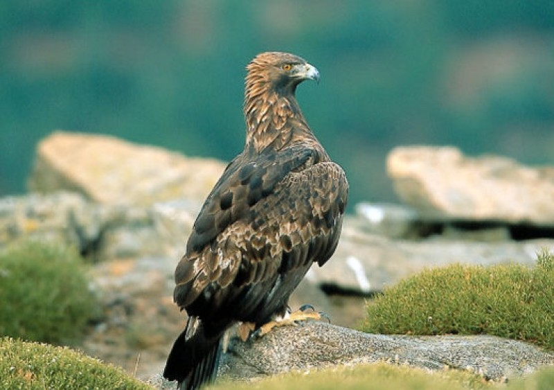 Parts of Sierra Espuña closed to the public for 6 months to protect golden eagles