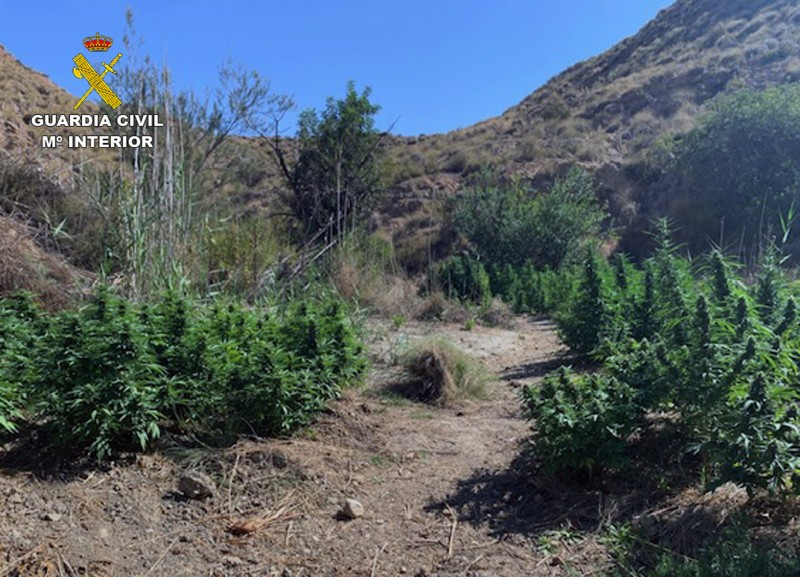 <span style='color:#780948'>ARCHIVED</span> - Open-air marihuana plantation found in Murcia mountains