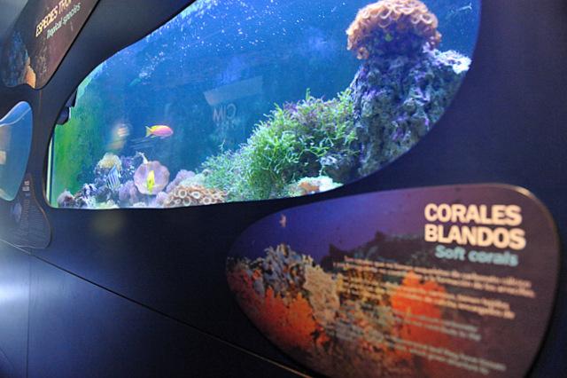 The CIMAR museum and aquarium in Águilas